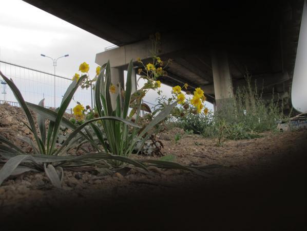 Bryan Connell: GR13 urban trail project stills B
