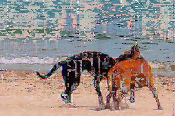 Paul Hertz, Dogs 001 (Foster Avenue Beach, Chicago), digital print, 2013 (from t