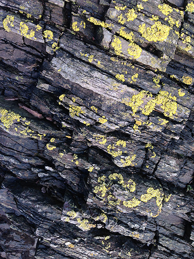 At the intersection between biology and geology - lichen on Devonian slate,  Old Mill Creek, Dartmouth, Devon, UK. Photo by J. R. Carpenter.