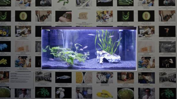 Lynn Hershman Leeson, Installation at ZKM. The Infinity Engine - genetically modified fishes 2015.
