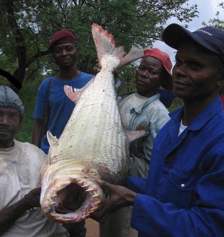 congo-fish-teeth-03