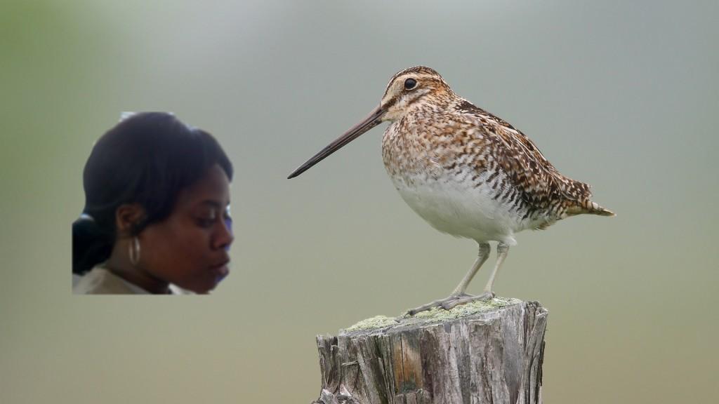 kelly and bird